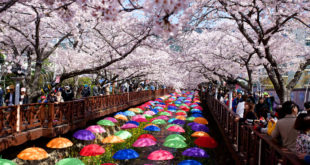 The 54th Jinhae Cherry Blossom Festival